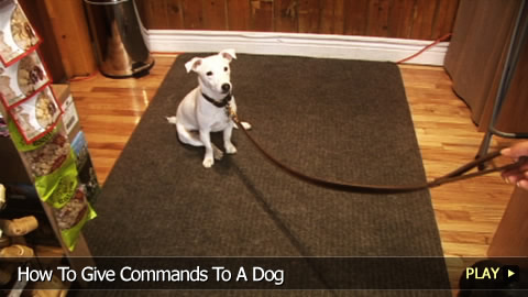 How To Give Commands To A Dog