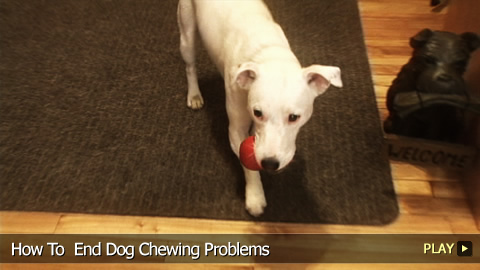 How To End Dog Chewing Problems
