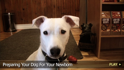 Preparing Your Dog For A Newborn