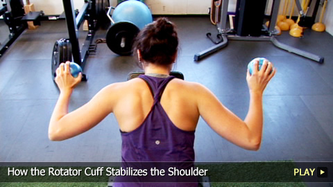 How the Rotator Cuff Stabilizes the Shoulder
