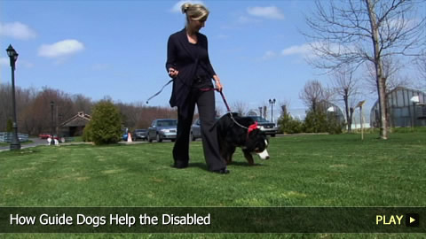 How Guide Dogs Help the Disabled