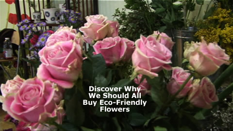 Learn About Organic Eco-Friendly Flowers