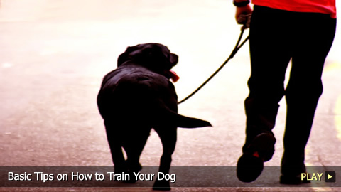 Basic Tips on How to Train Your Dog