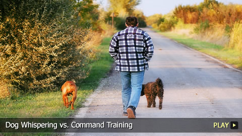 Dog Whispering vs. Command Training