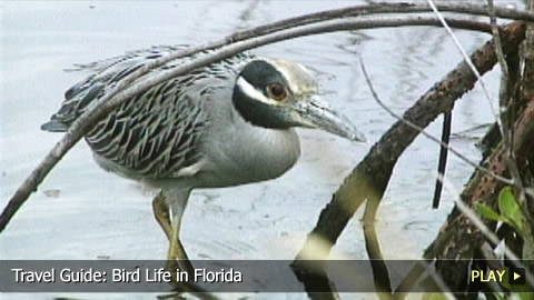 Discover The Bird Life in Florida