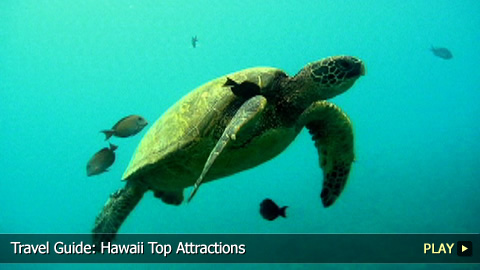 Top Attractions To See in Hawaii