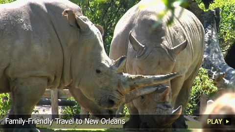 Family-Friendly Travel to New Orleans