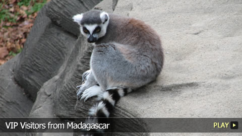 VIP Visitors from Madagascar