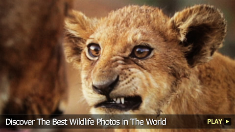Discover The Best Wildlife Photos in The World