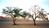 Travel Guide: Namibia - Top Activities